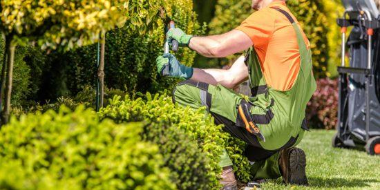 Tree-Plant Trimming